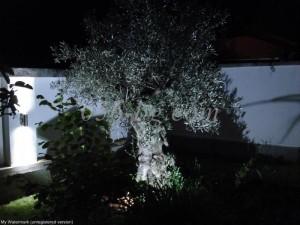 градинско_осветление_2